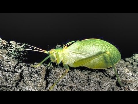 Sounds Of Katydids And Crickets At Night Youtube