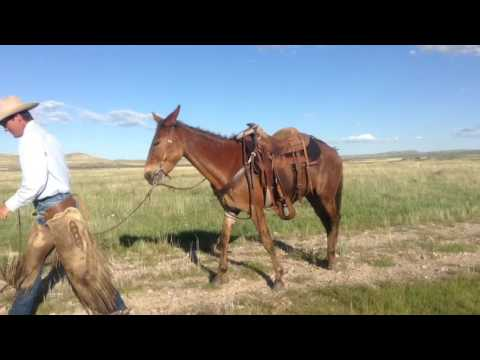 Bonnie Hip #33 Jake Clark's Mule Days Ralston, WY June 15-19 2016