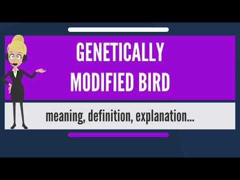 What is GENETICALLY MODIFIED BIRD? What does GENETICALLY MODIFIED BIRD mean?