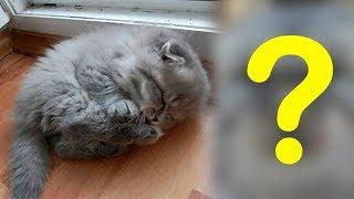 Старушка подобрала котенка на улице, но даже не представляла, кого она спасла и чем все закончится!