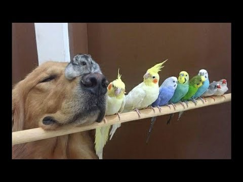 Cute Parrots Videos Compilation cute moment of the animals - Soo Cute! #3