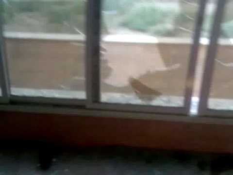 What really happened in University Dorms of Tehran University Iran