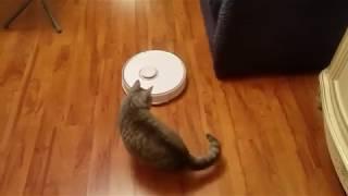 Кот Клаус vs робот-пылесос