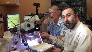Ukraine-Iran Cooperation in Microscopic Study of Chalcid Wasps Eurytomidae (Arabic + English)