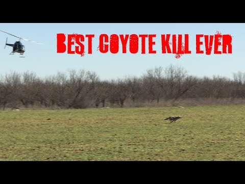 BEST COYOTE KILL SHOT EVER{WARNING GRAPHIC KILL SHOT}COYOTE HUNTING IN TEXAS