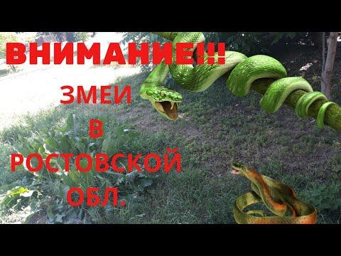 Огромная змея в Ростовской обл.