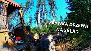 Zrywka drzewa na skład.