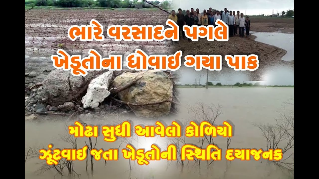 Damages to Manavadar villages due to floods caused heavy losses to farmers due to flooding village