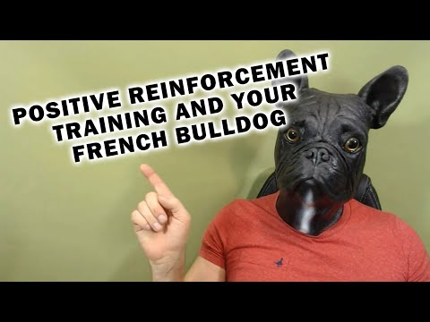 Positive Reinforcement Training and Your French Bulldog
