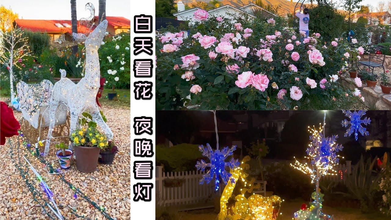 (园艺篇148)感恩节假日期间布置圣诞彩灯是我们社区的传统。祝大家节日快乐!