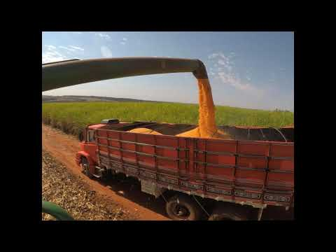 colheita de milho safrinha em japurá 2019 GoPro