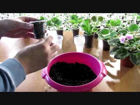 Правильно посадить черенки (листы)фиалки. Эффективное укоренение
