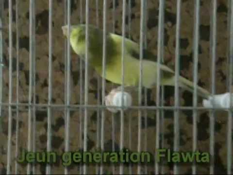 chant canari flawta mp3