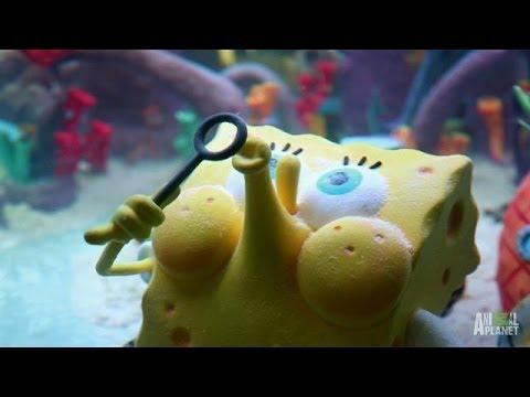 Reveal: SpongeBob