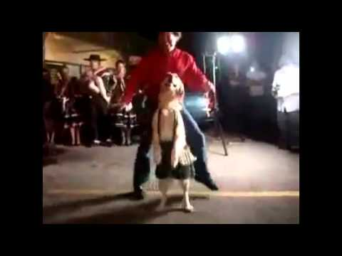 Факты реинкарнации.   Танцующий пес собака танцует