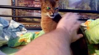 Моя добрая кошка)))