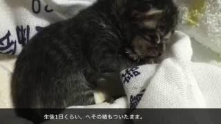 子猫を保護その1