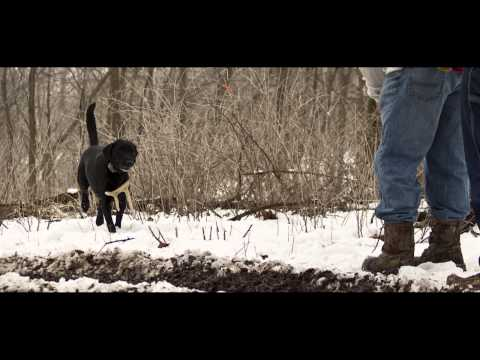 Tom Dokken talking about NASHDA- North American Shed Hunting Dog Asscociation