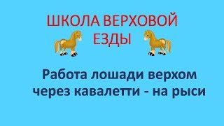 Работа лошади верхом через кавалетти на рыси