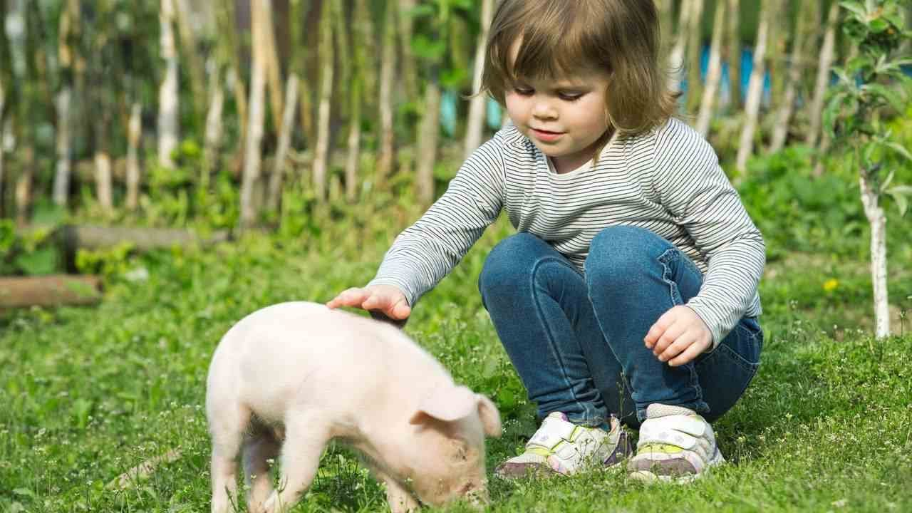 Do Potbellied Pigs Make Good Pets? | Pet Pigs - YouTube