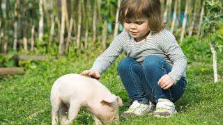 Do Potbellied Pigs Make Good Pets? | Pet Pigs