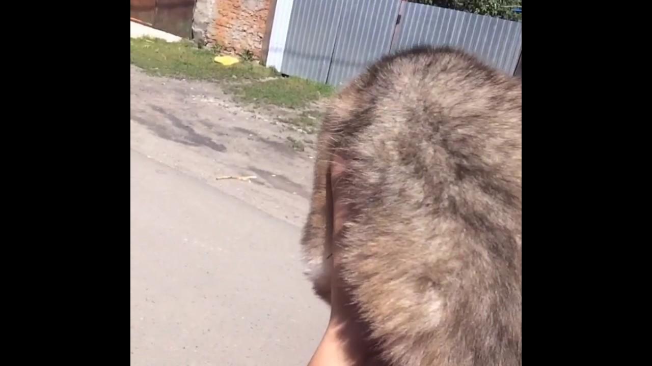 Упряжка Сибирских Хаски - YouTube