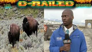 DEION BROXTON REACTION to YELLOWSTONE BISON Herd of Bison VIRAL VIDEO TV News Reporter Meme