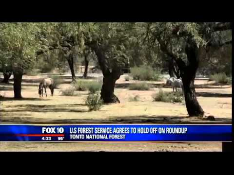 Fox 10 Salt River Horse Round Up On Hold