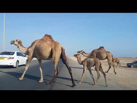 TRIP TO OMAN SALALAH