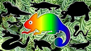 Reptiles Names for Kids | Learn Zoo Wild Animals Names and Sounds, Educational Learning for Children