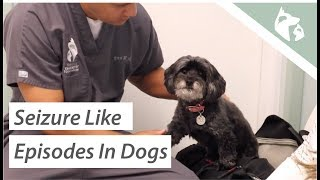 What Causes Seizures in Dogs? Vlog 9