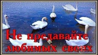Красивая песня Лебеди Не предавайте любимых своих