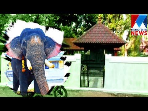 Temple festivals without elephants  | Manorama News | Nattuvartha