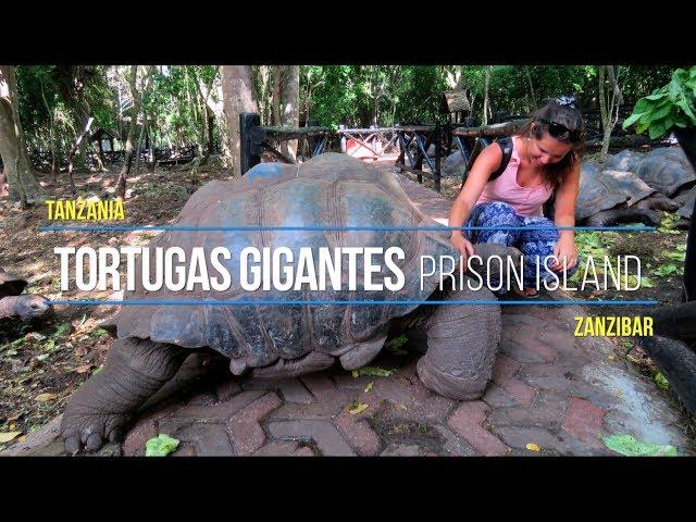Tortugas de Tierra Gigantes Africanas