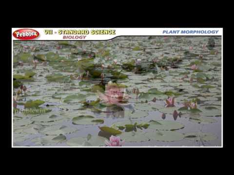 Samacheer 7th Science | Term 01 | Unit 03 PLANT MORPHOLOGY