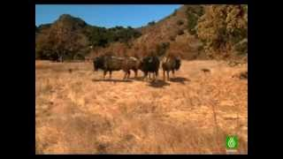 Lobos gigantes documental