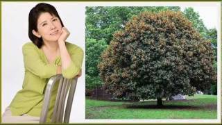 Masako Mori the song, the charm 現在(いま)の昌子さんも過ぎし日の昌...