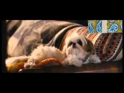 смотреть фильм семь обоняней