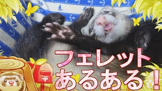 https://gogoferret.com/ferret_aruaru/ GoGoふぇれっと様の 飼い主共感...
