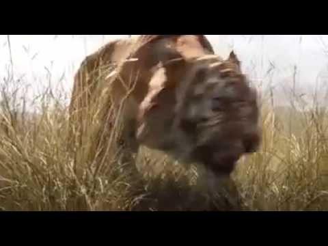 The Jungle Book 2016 Trailer HD