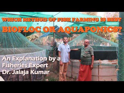 Comparison Of BIOFLOC And AQUAPONICS Fish Farming Techniques !!
