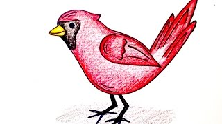 Drawing Lesson: How to Draw a Cardinal