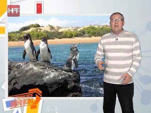 Спросите дядю Вову. Почему пингвины не живут в Арктике?