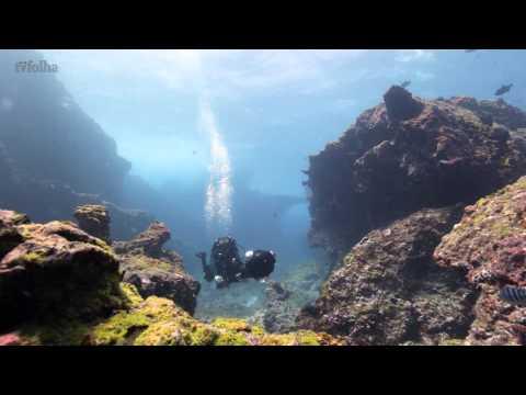 corais em Fernando de Noronha são mapeados
