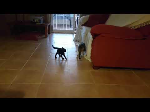 Funny baby cat Oreo
