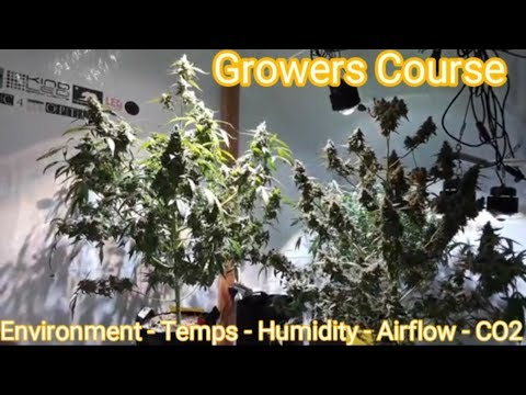 How to grow BIG FAT BUDS! Environment, Temperatures, Humidity, Airflow & CO2 -Growers Course Ep#1