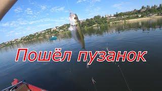 Пузанок начал клевать Ловля морской селедки с лодки Крым летом 2020