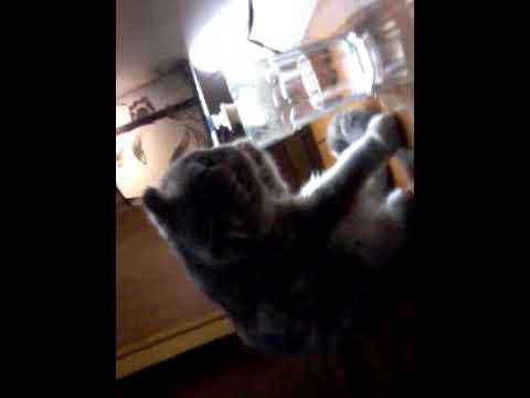 Вопрос: Кошка пьет только вчерашнюю воду Почему?