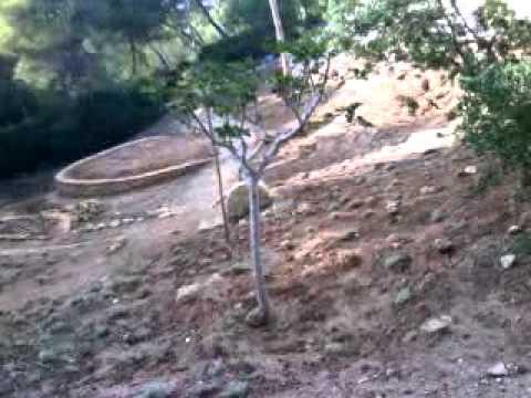 Aprendices de jardiner a en torrent valencia youtube - Jardineria en valencia ...