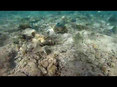 Fiji travel video 2015